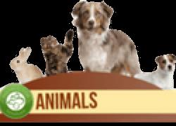 Animals Seminar