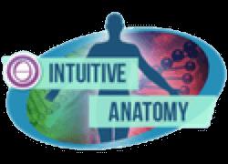 Intuitive Anatomy