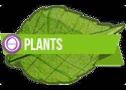 Plant Seminar